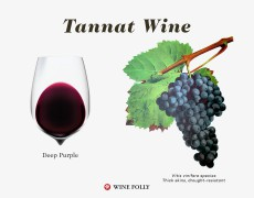 Tiết lộ bí mật vì sao rượu vang Tannat lại ngon-bổ-rẻ....