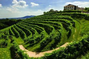 Hướng tới năm 2018 tuyệt vời cho rượu Prosecco