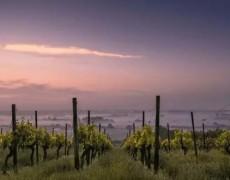 Phạm vi giữa ngày và đêm ảnh hưởng thế nào đến rượu vang?