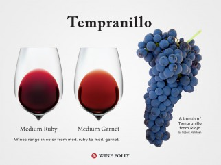 A Guide to Tempranillo Wine